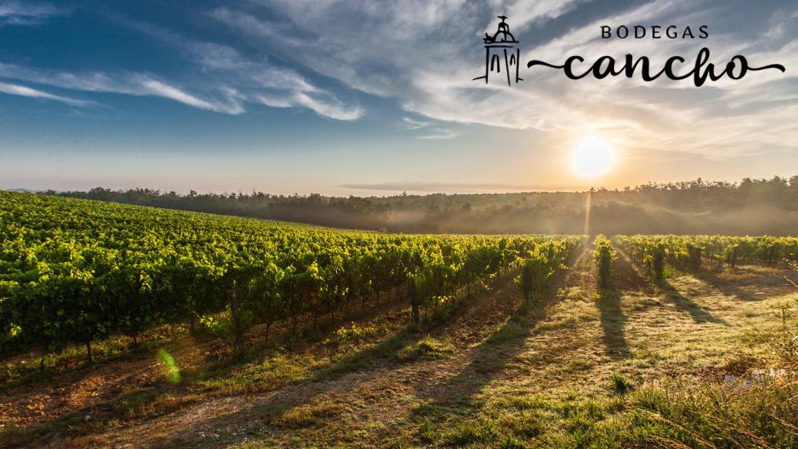 Vino-casero-Extremeño-elaboracion-vino-de-pitarra